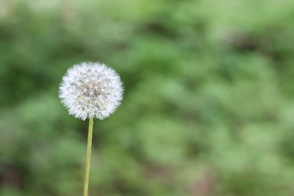 allergia polline sintomi terapia